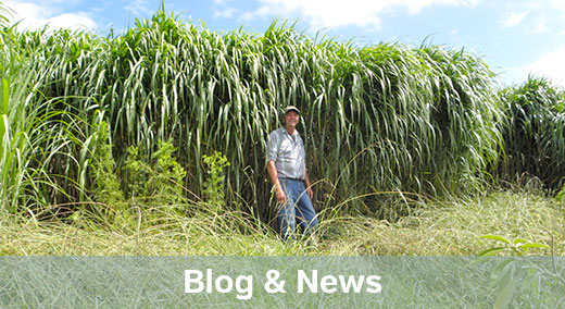 blog-news-link